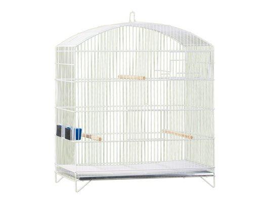 Viveiro Pássaros Oval Canario Periquito Agapornis Londrina 68