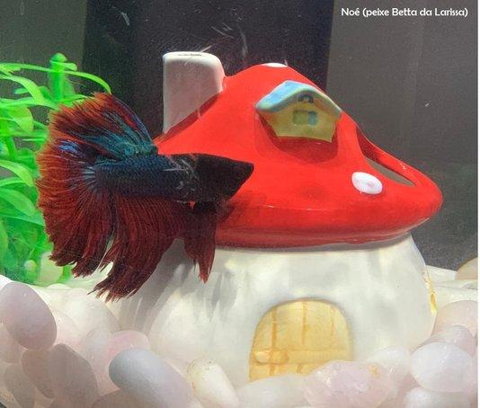 Casa Toca Aquario Betta Hamster Chinês Porcelana Cogumelo