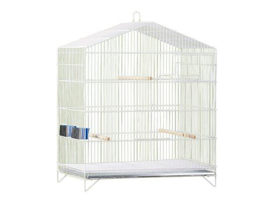Viveiro Pássaros Canário Agapornis Capela Epóxi Londrina 67